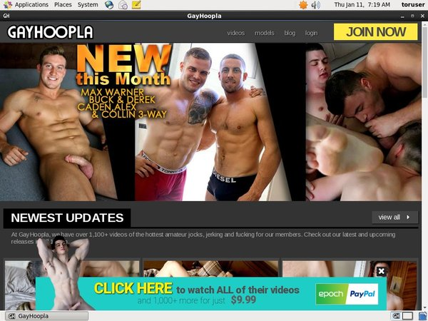 Free Users For Gay Hoopla